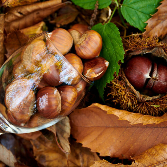 Wine glass full of chestnuts in the nature